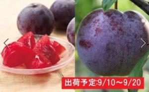 最高級大玉プラム「サンルージュ」約2kg 大江町産