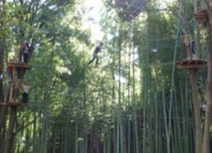 森の空中散歩!フォレストアドベンチャー・おおひら 体験チケット 上級コース