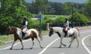 乗馬体験60分×2名 初心者向け放牧地コース